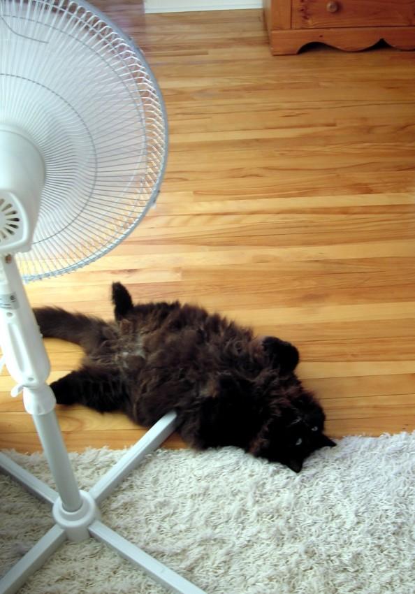 ebony in the heatwave