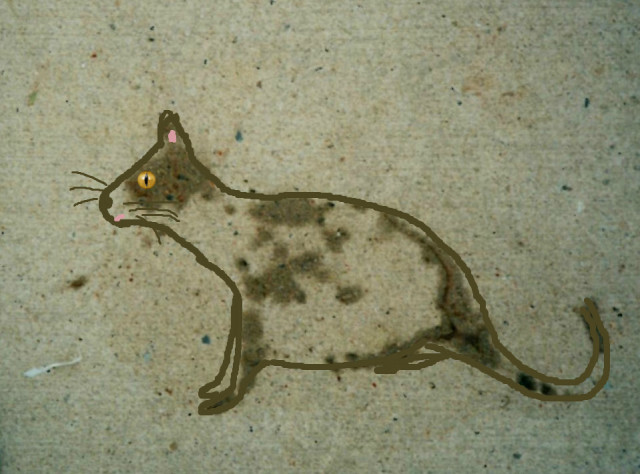 sidewalk cat | movita beaucoup