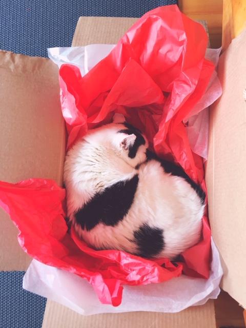 niles in a box