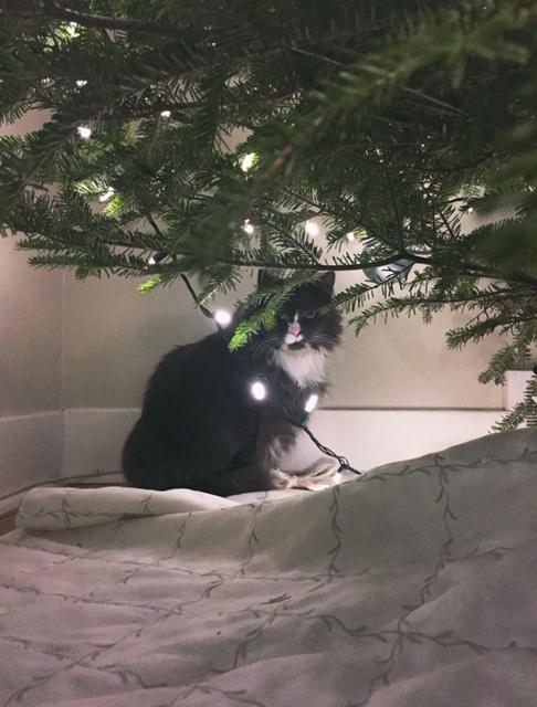 dorey under the tree
