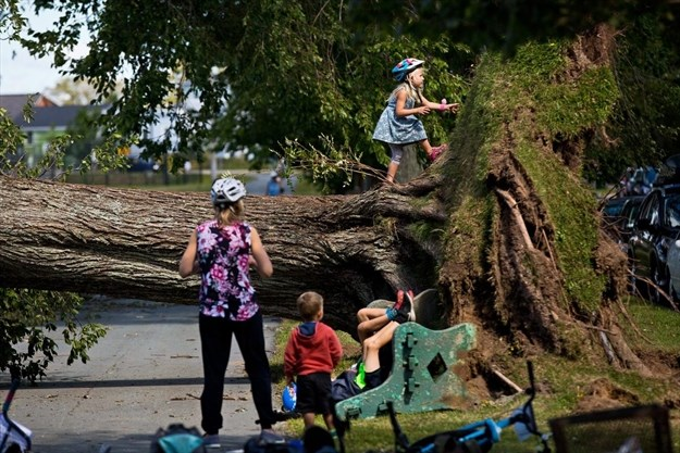 Kids play on an uprooted tree on Trollope Street in Halifax, N.S., on Sept. 9. Schools were closed as the city recovered from the effects of hurricane Dorian. - Zane Woodford, Star Halifax